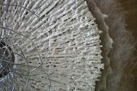 cirkelophout wit j W