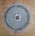schelpjescirkel 1 W